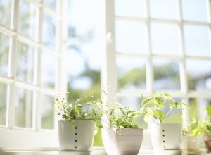 Open windows with potted plants on the sill to improve air quality